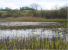 Wetlands_Icon